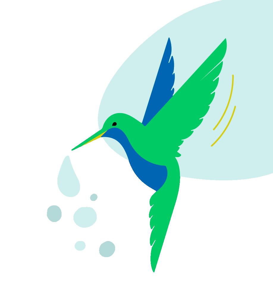 Teaser Medias - Légende du colibri